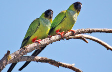 טיול בעיקבות הציפורים במאליבו/כתב וצילם אבי דרורי