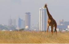אפריקה תת-סהרה: יבשת ההזדמנויות הבלתי מוגבלות/חיים דוכובני