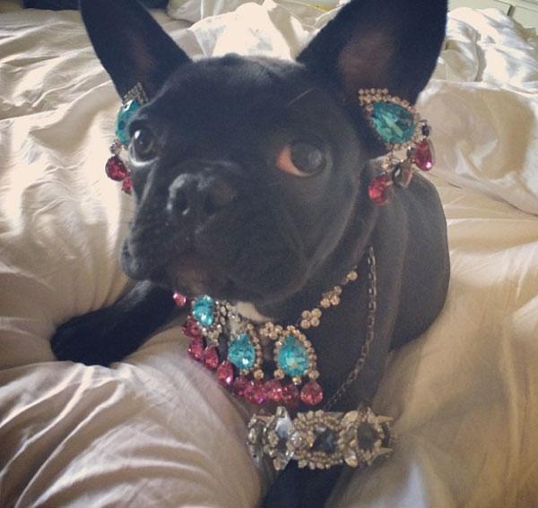 ליידי גאגא מסתבכת עם ארגון זכויות בעלי החיים, שוב…/נטע-לי שיטה